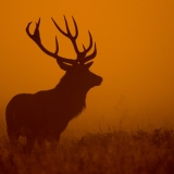 deer-4000x2250-dawn-silhouette-4k-2379(1)